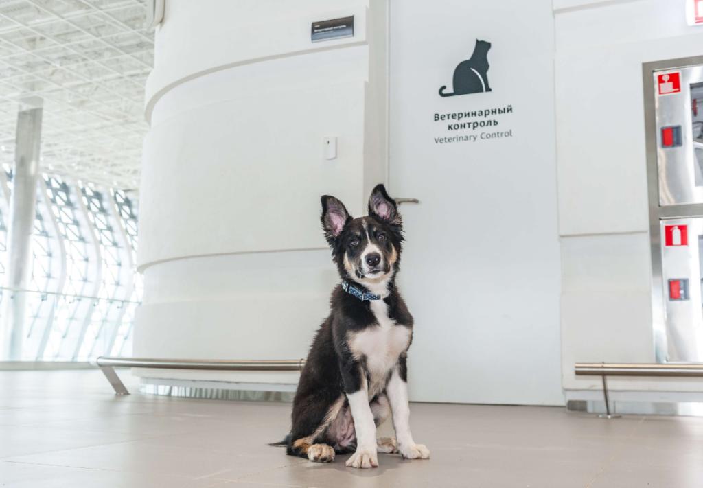 Аэропорт Симферополя - Правила перевозки животных