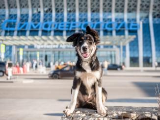 Талисман аэропорта отмечает юбилей - 100 дней службы