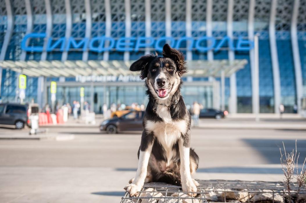alisa-aeroport-simferopol